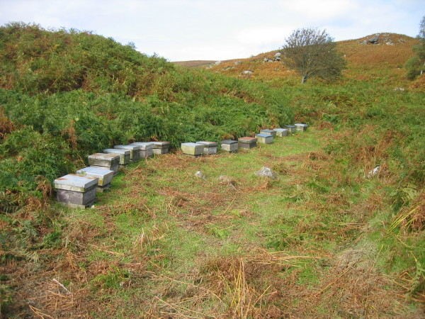 Beehives near Blawearie