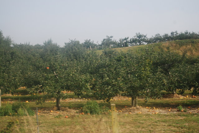 Orchard by the railway