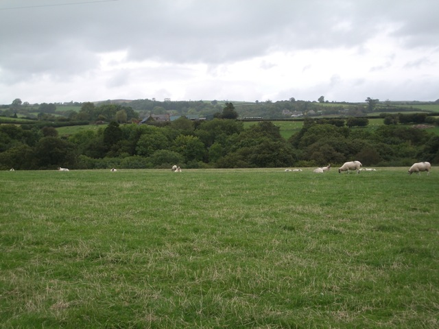 Maesyronnen: pasture land