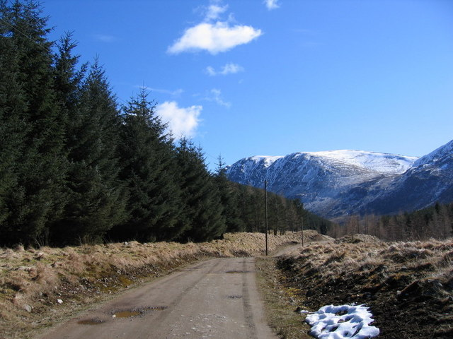 Forestry in Upper Glen Clova