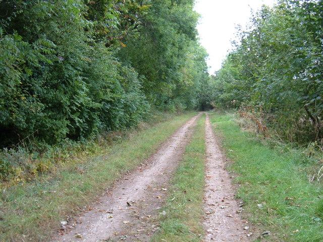 Green Lane beside Headon Plantation