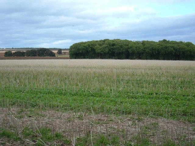 Moors Farmland