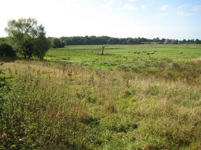 Pulborough Brooks RSPB site and flood meadow