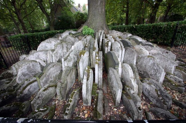 The Hardy Tree, St Pancras (Old Church), Churchyard