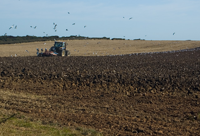 Ploughing near Hilston