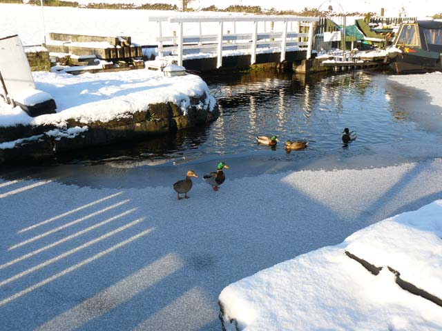 Ducks on the icy canal at Barrowford Top Lock