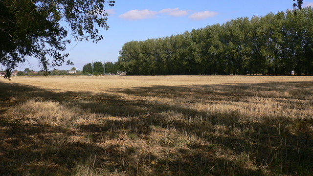 Field with boundary of tall trees north of Daw Lane