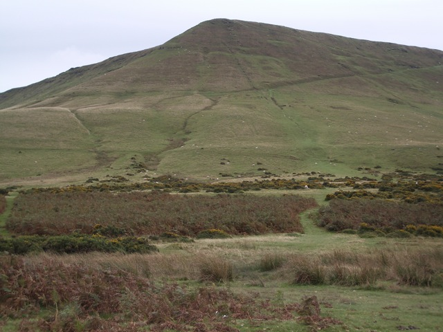 Hay Bluff: grazing land on the north west flank, above the Hay road