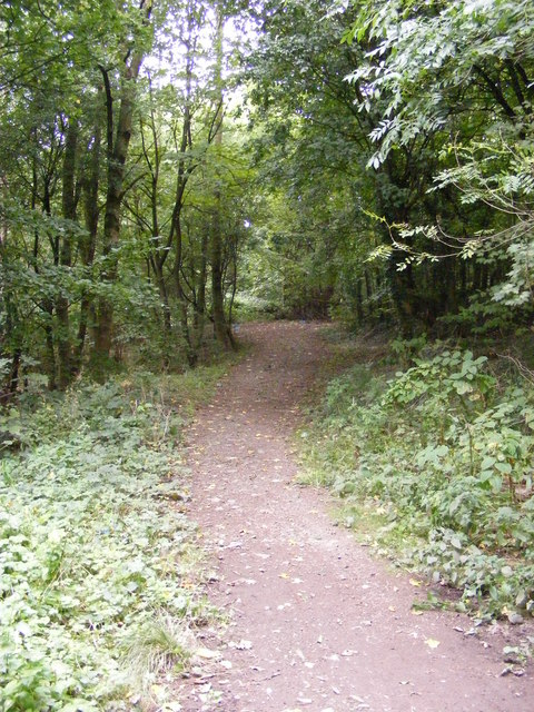 Castle Hill Woodland