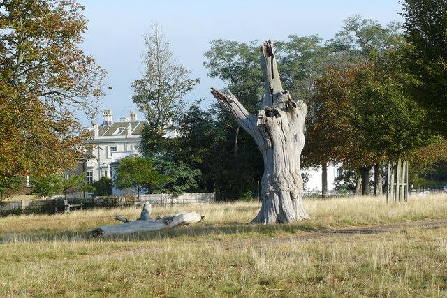 Parkland in Richmond Park
