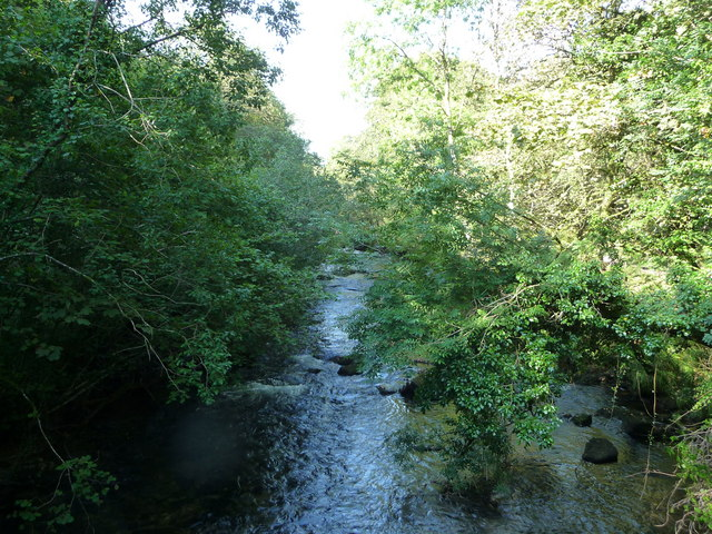 Exmoor : The River Barle & Trees