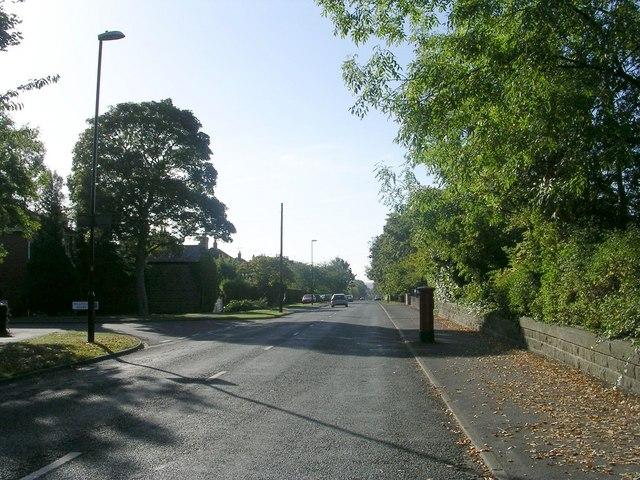Forest Lane - Forest Lane Head