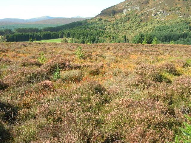 Moorland north of Balnarge, Glen Glass