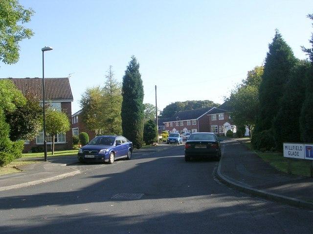 Millfield Glade - Forest Lane