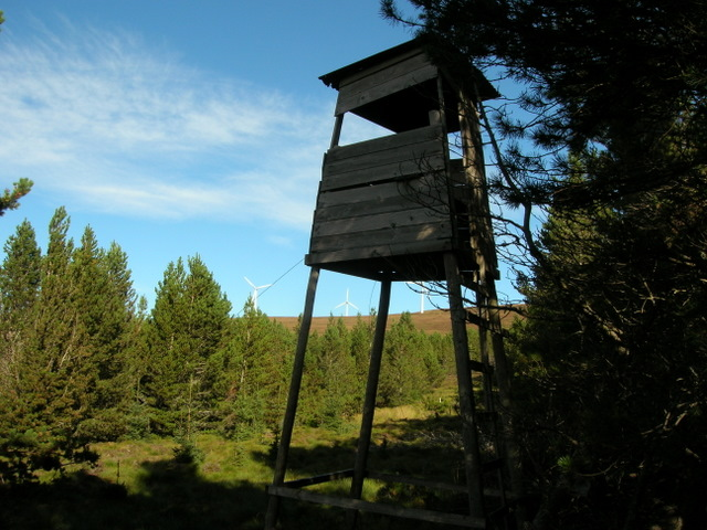 Forestry tower NW of Meall an Tuirc