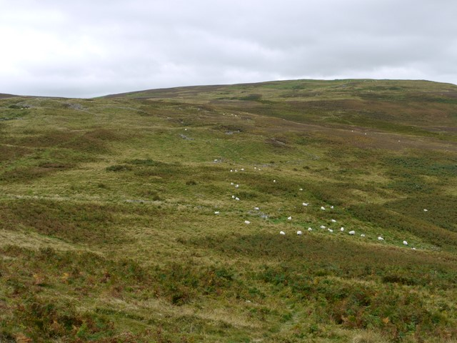 Rough grazing south-west of White Law