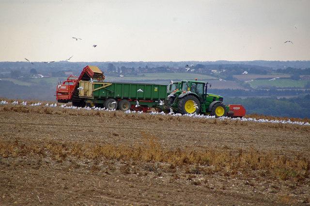 Potato Lifting near Worlaby