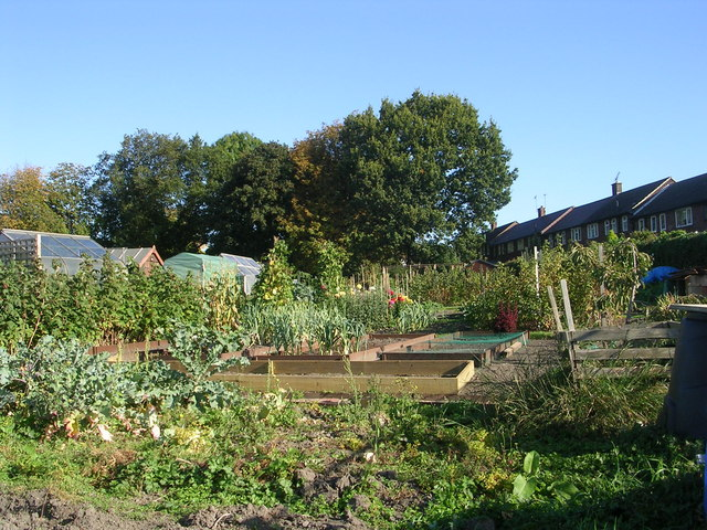 Allotments - Forest Avenue