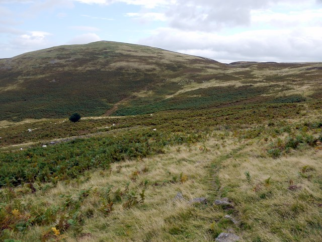 White Law from permissive footpath to Yeavering Bell