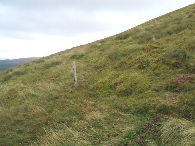 Ancient fence posts on Hedgehope Hill