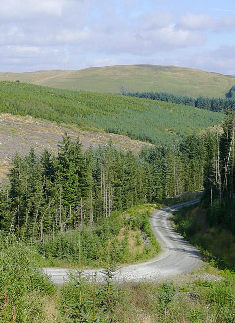 Forestry road and Esgar Cloddiad, Powys