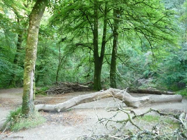 Exmoor : Tarr Steps Woods