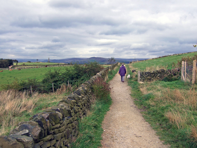 Footpath on Werneth Low