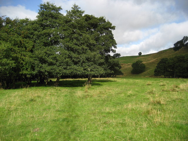Teesdale Way near Sun Bank