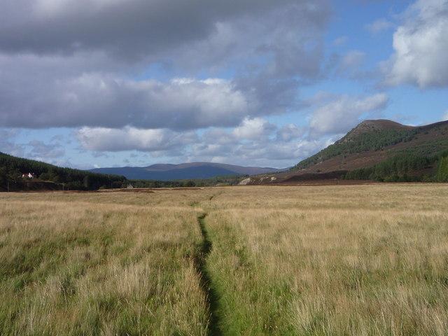 Grassy path in Glen Feshie