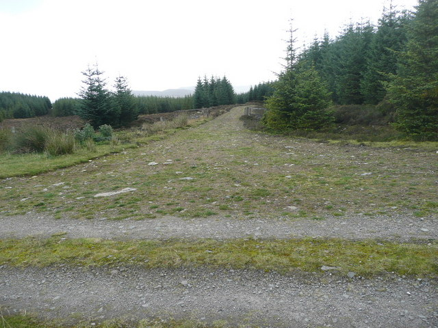 Track junction in forest