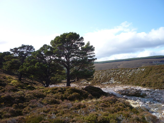 Attractive burnside trees and heather