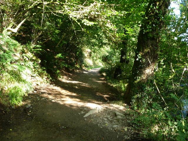 Exmoor : Riverside Path in Tarr Steps Woods