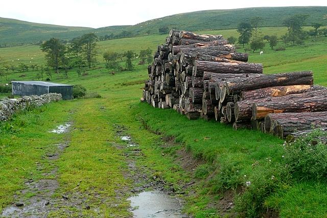 Logs at Fawdon
