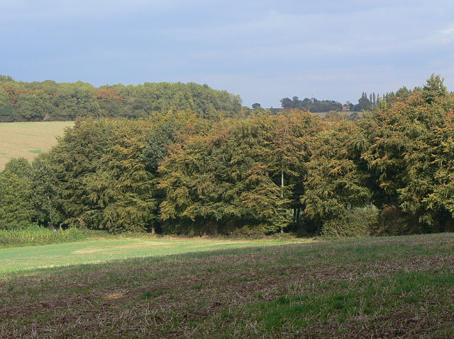 Windbreak at Souther Wood