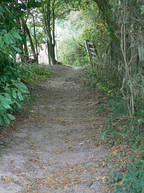 Bridleway at Souther Wood