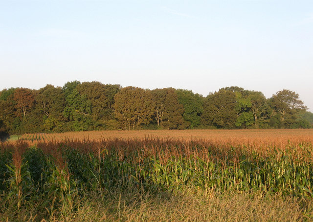 Twenty Acre Meadow