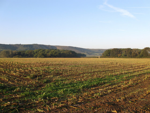 Denshire Field