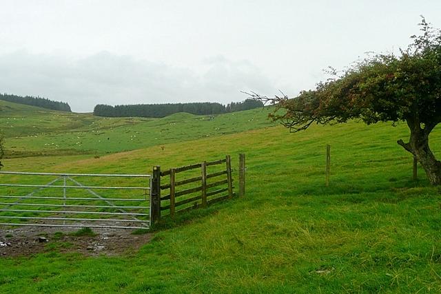 Footpath towards Prendwick