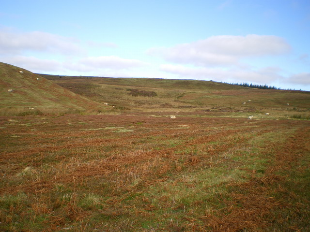 The valley of a tributary of the Nant y Ddwy Wern