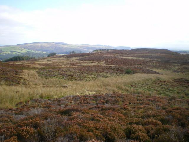 Moorland above Llyn Efyrnwy