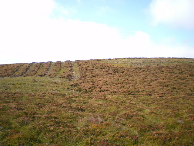 Heather moor management on Cefn Tre-ysbyty