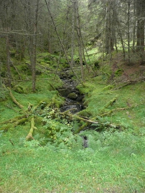 Mossy hollow with burn