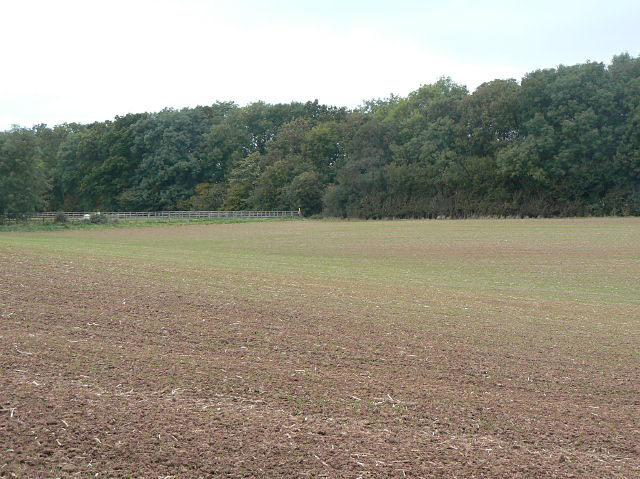 Looking towards Thistly Coppice