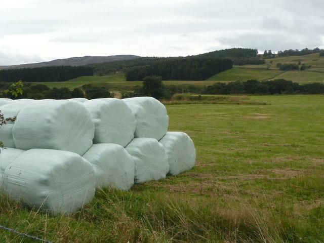 Silage rolls