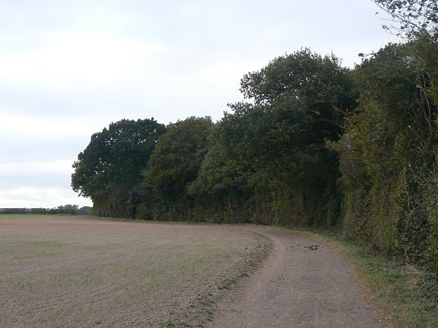The edge of Thistly Coppice