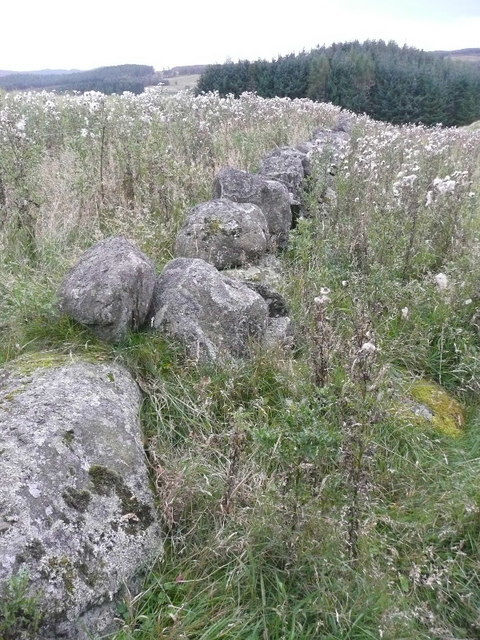 Dry stone wall between thistles