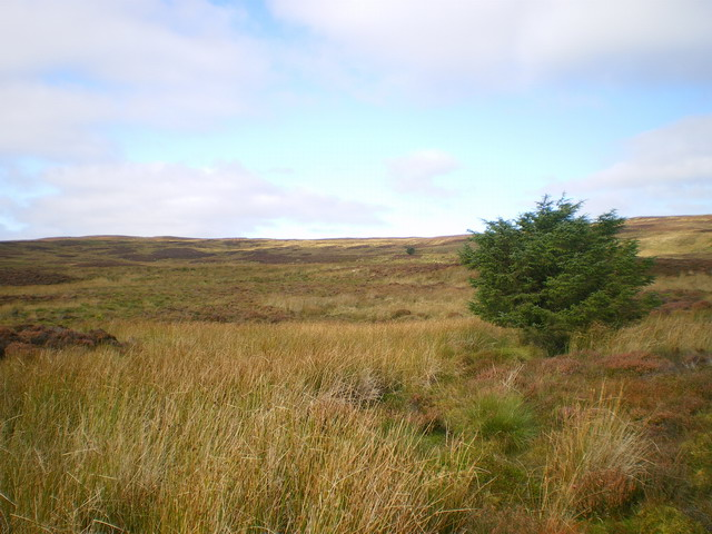 Moorland above Creignant