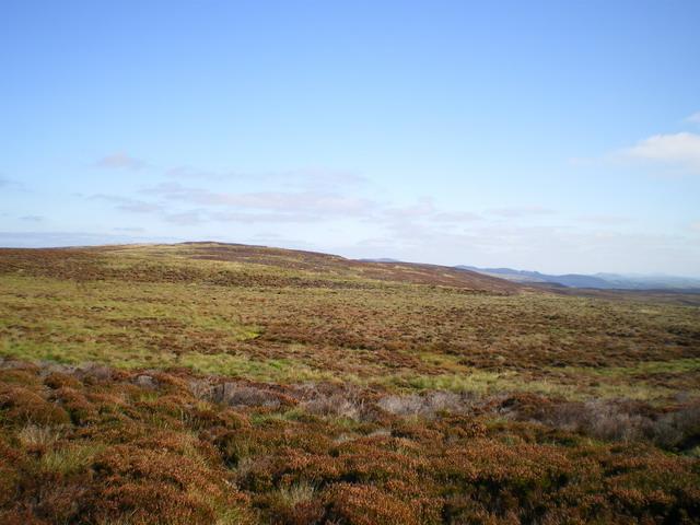 Looking east along the ridge