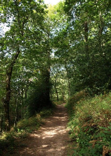 Dart Valley Trail, Long Wood
