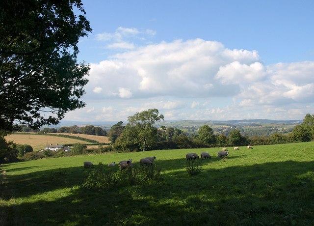 Sheep at Higher Greenway
